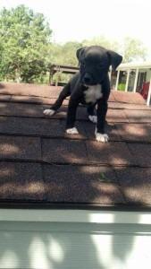 Bella was adopted by Kylie Grahmann.