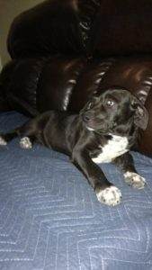 Meatball was adopted by Phayton Oakes.