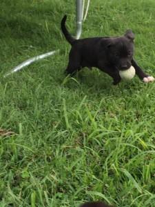 Blanca Puppy - Big Mike