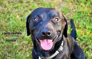 Capone is a happy boy and lives with his mommy Deborah Volcik!