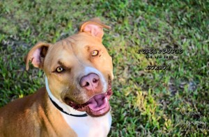 Cowboy was adopted by the Tyner family!